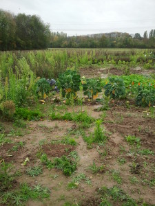 Garten Nov